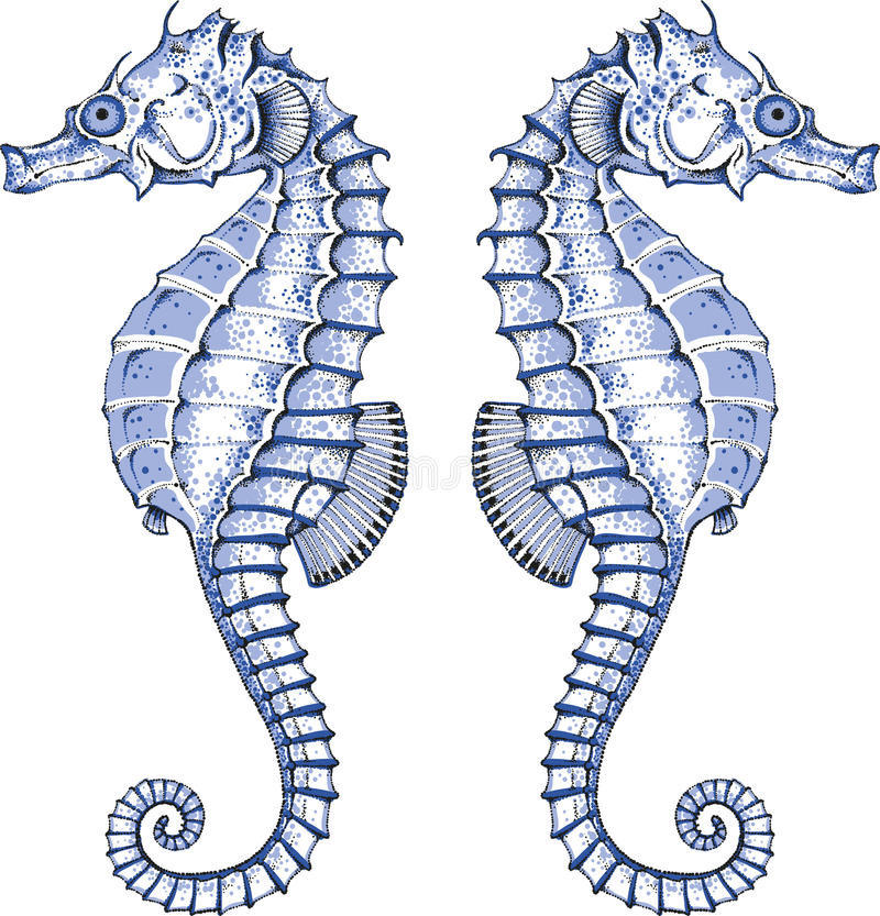 Graphic Seahorse. Seahorse bay - autor's graphic summer design element with seahorse vector illustration