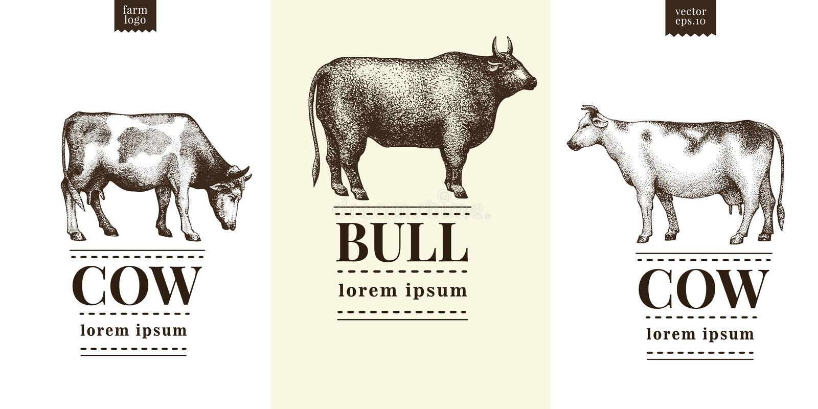 Graphical cow and bull silhouette, hand drawn vintage illustrations. Vector set with three logo templates. stock illustration