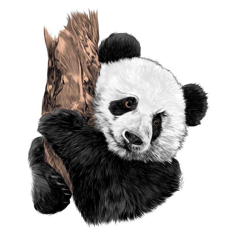 Graphiques de vecteur de croquis de panda illustration libre de droits