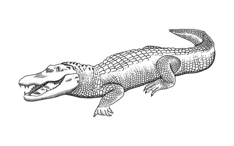 Graphiques tir?s par la main de crayon, crocodile, alligator, croc Gravure, style de pochoir Logo noir et blanc, signe, embl?me,  illustration de vecteur