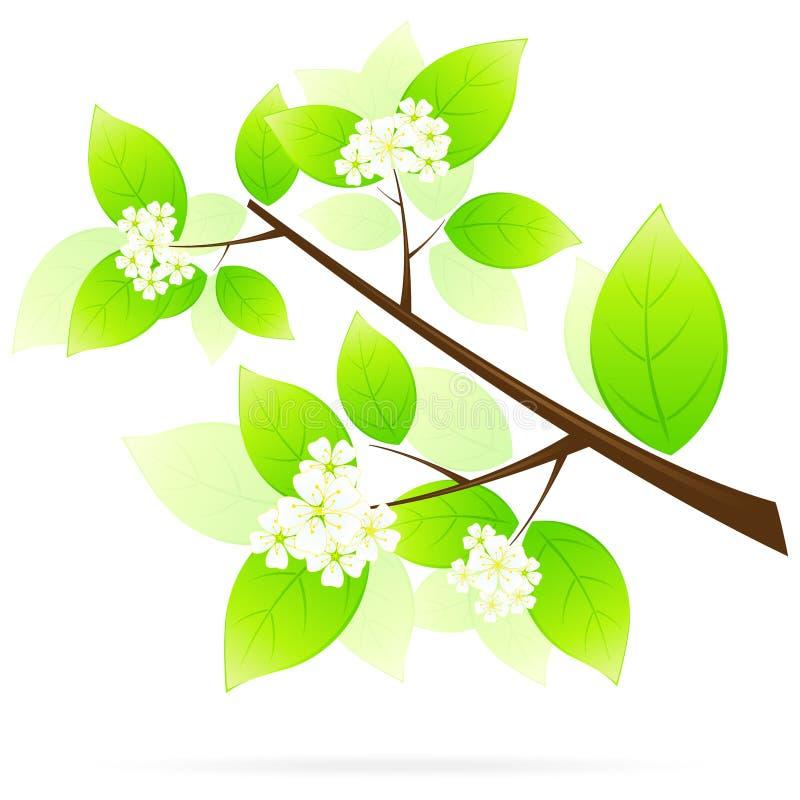 Graphisme vert de branchement d'arbre illustration de vecteur