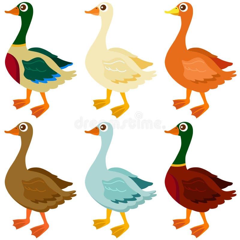 Graphismes de vecteur : Canards, oie, oies illustration de vecteur