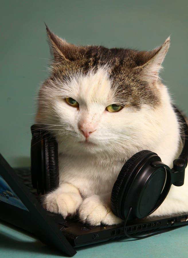 Grappig beeld van kat met notitieboekje en hoofdtelefoons stock foto's