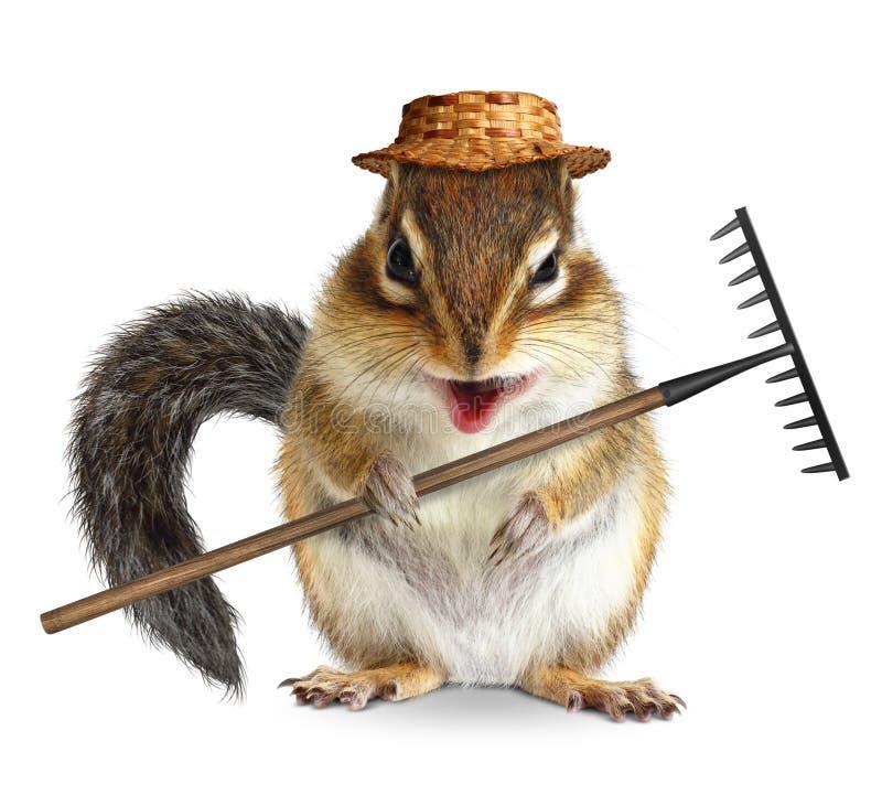 Grappig die tuinmandier, aardeekhoorn met hark en hoed op wh wordt geïsoleerd royalty-vrije stock foto's