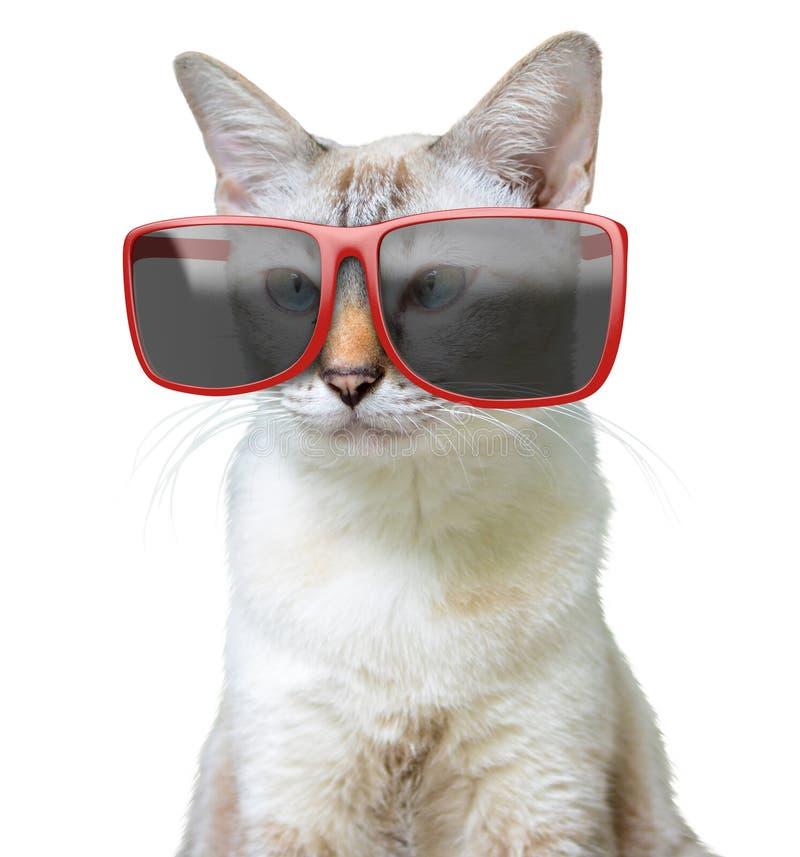 Grappig dierlijk portret van een koele kat die grote overmaatse rode die zonnebril dragen, op een witte achtergrond wordt geïsole stock fotografie