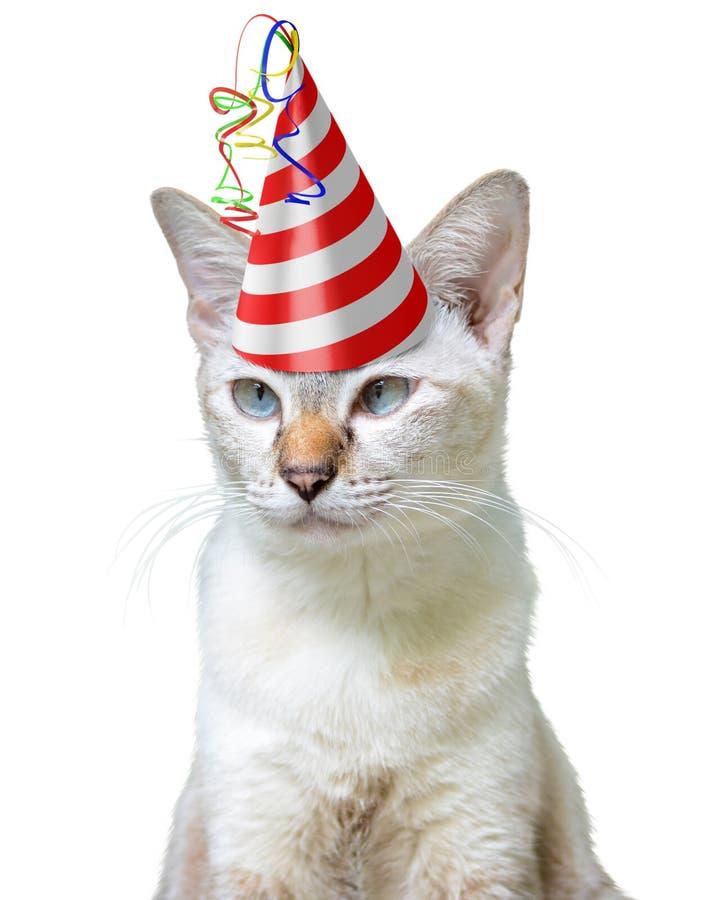 Grappig feestneusconcept een kat die een verjaardagshoed dragen, dat op een witte achtergrond wordt geïsoleerd royalty-vrije stock foto's