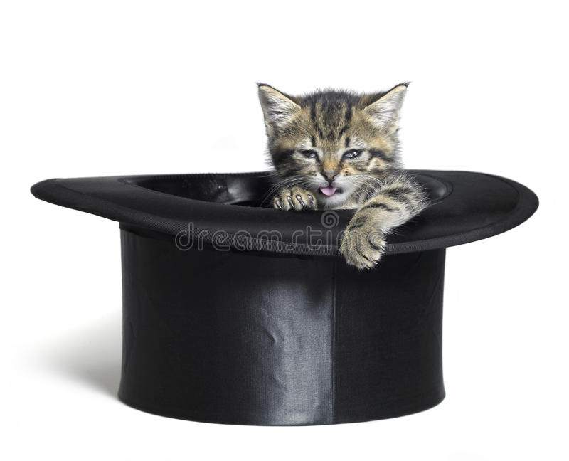 Grappig katje in hoge zijden stock fotografie