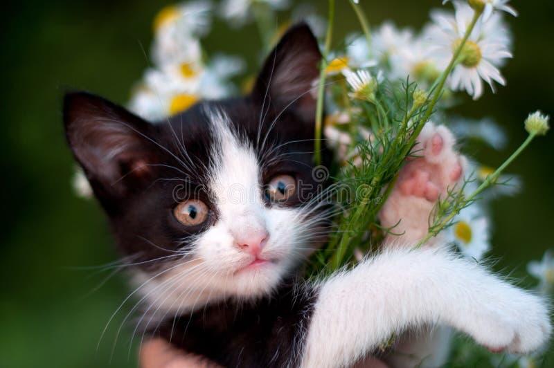 Grappig katje met boeket van madeliefjes stock foto's