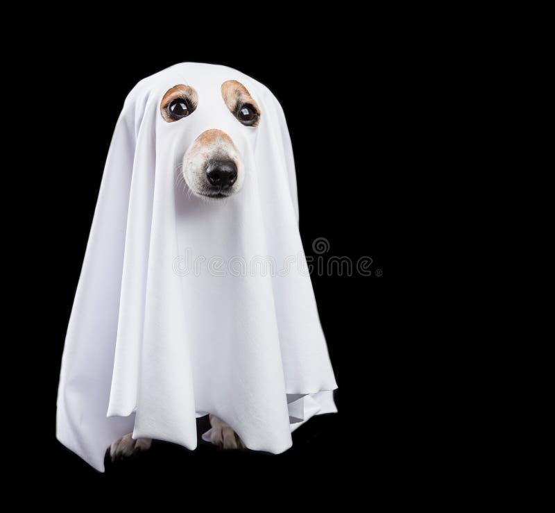 Grappig klein wit Halloween-spook op zwarte achtergrond Het leuke hond kijken royalty-vrije stock afbeelding