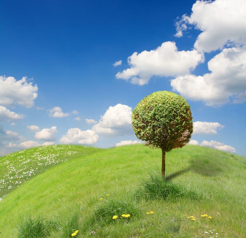 Grappig landschap met boom stock afbeeldingen