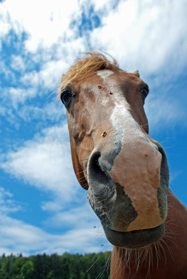 Grappig paard stock foto's