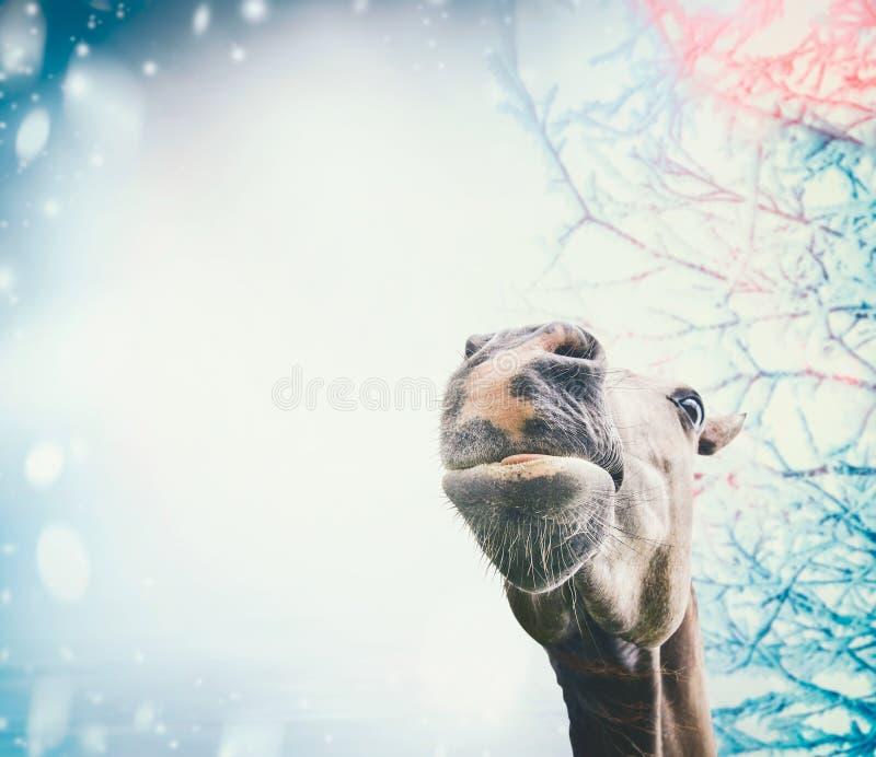 Grappig paardgezicht bij sneeuw de winterachtergrond royalty-vrije stock foto
