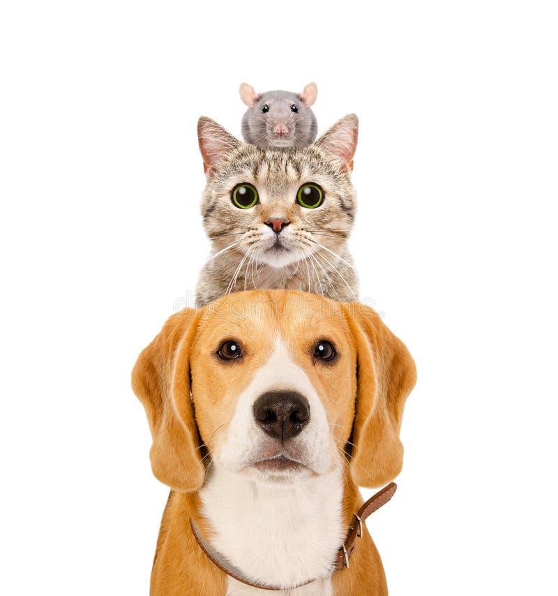 Grappig portret van huisdieren stock afbeelding
