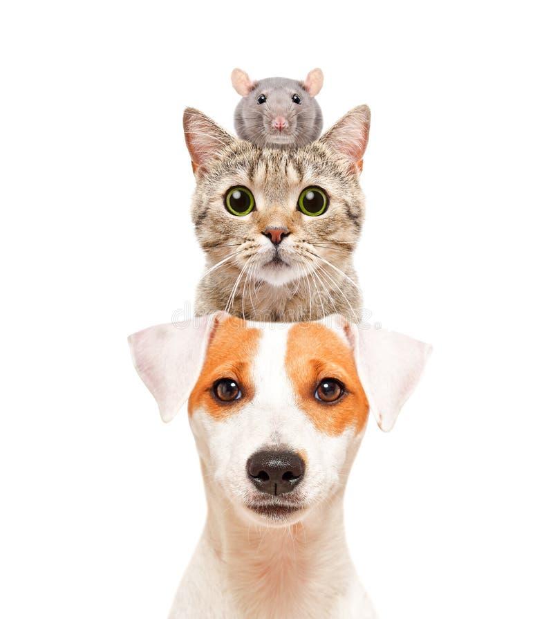 Grappig portret van leuke huisdieren stock foto's