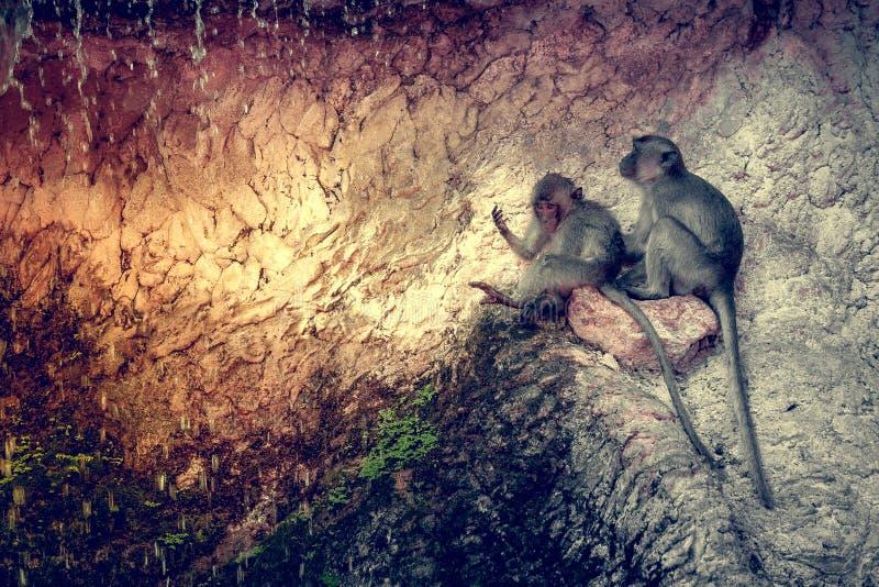 Download Grappige aap stock foto. Afbeelding bestaande uit jeugd - 54087190