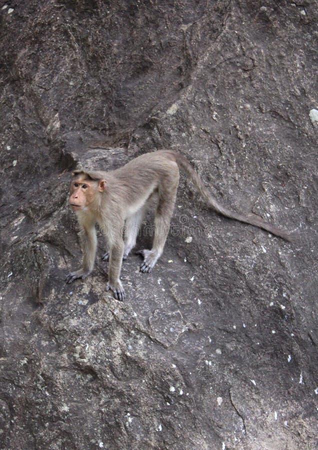 Grappige aap om op de rots te springen royalty-vrije stock afbeelding