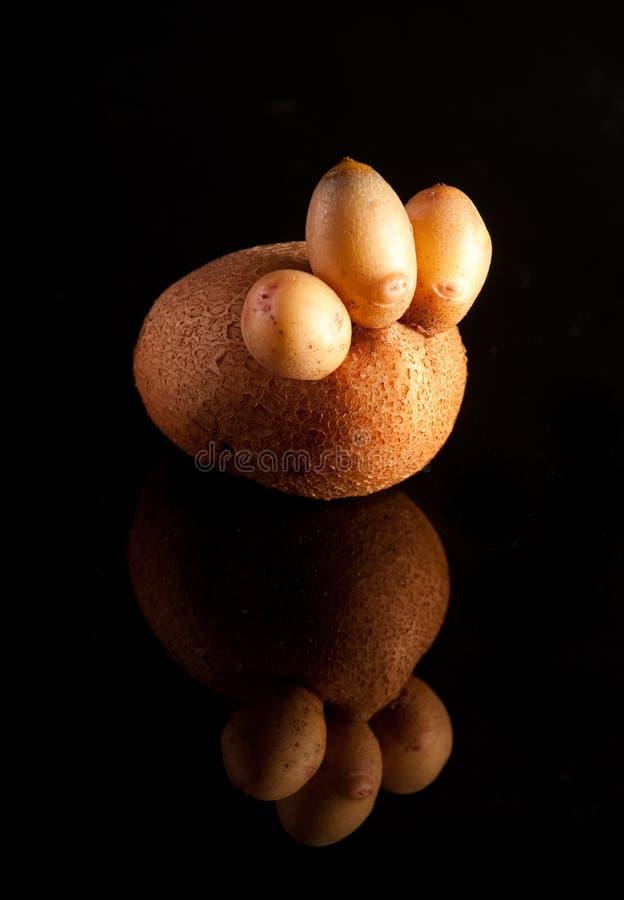 Grappige Aardappel royalty-vrije stock afbeeldingen