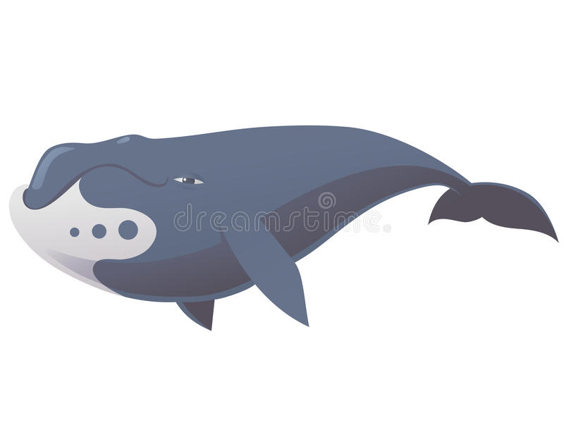 Grappige bowheadwalvis royalty-vrije illustratie