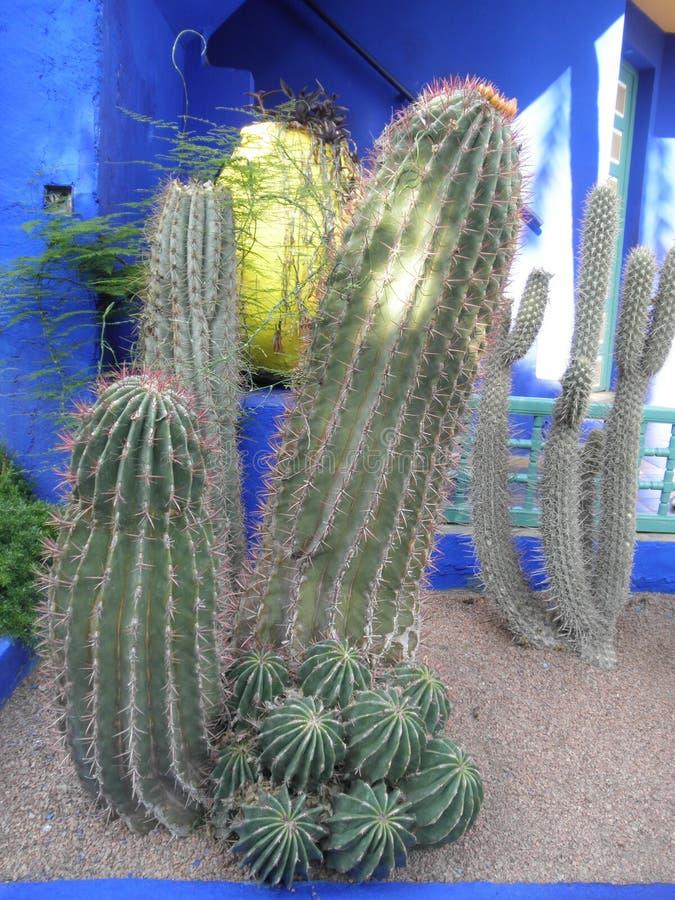 Grappige cactus royalty-vrije stock foto's