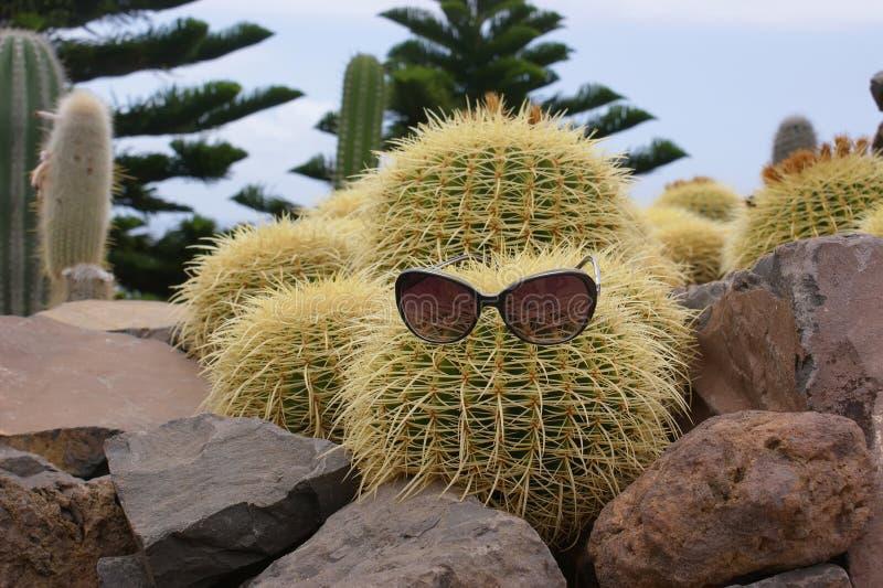Grappige cactus met glazen stock afbeeldingen