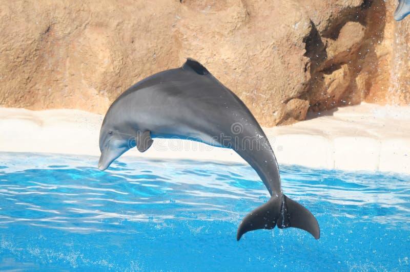 Grappige Dolfijnen stock afbeeldingen