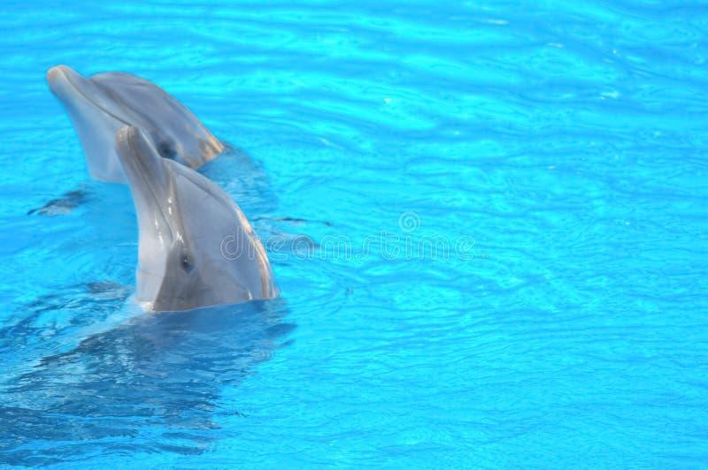 Grappige Dolfijnen stock foto's