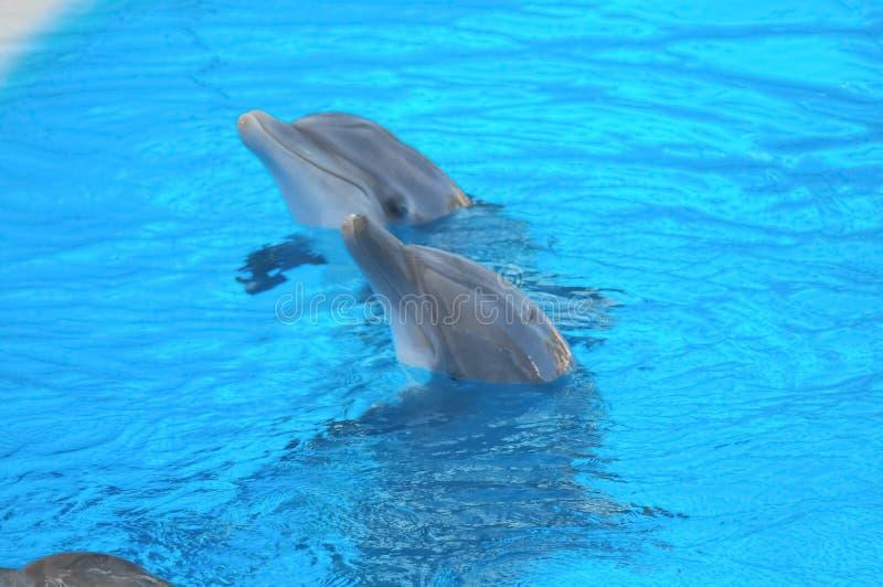 Grappige Dolfijnen stock foto