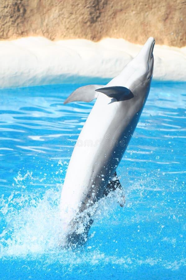 Grappige Dolfijnen stock afbeelding