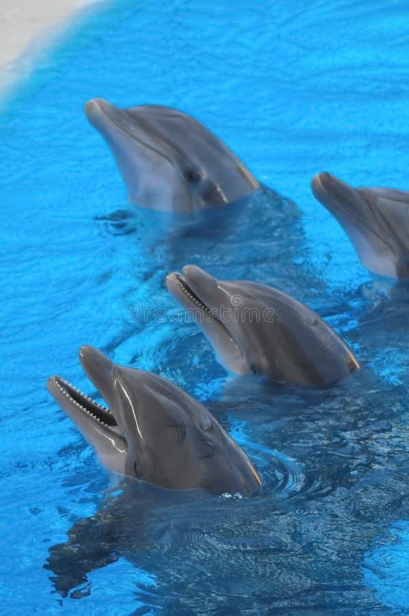 Grappige dolfijnen royalty-vrije stock foto's