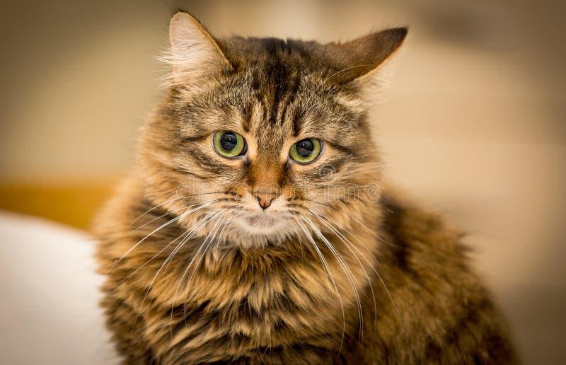 Grappige ernstige kat stock afbeeldingen