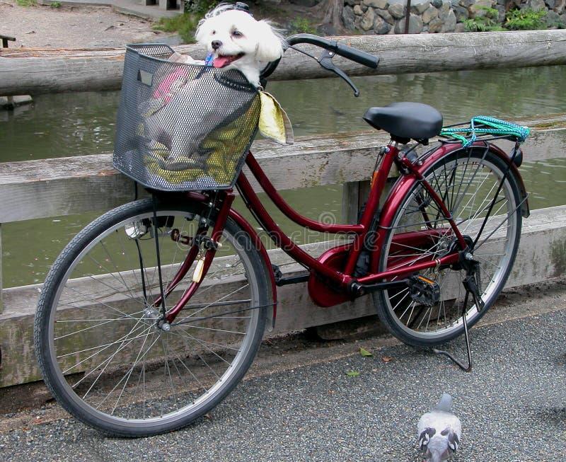 Grappige fiets stock foto's