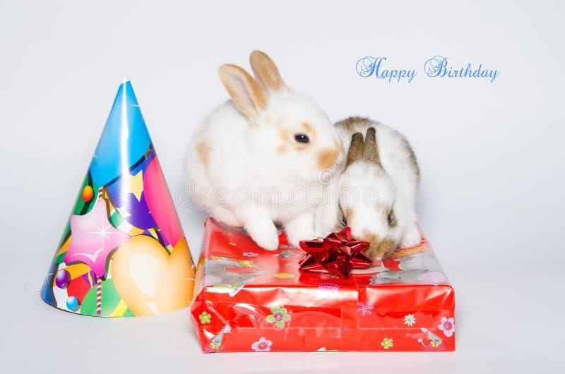 Grappige gelukkige verjaardagskaart met konijnen stock foto