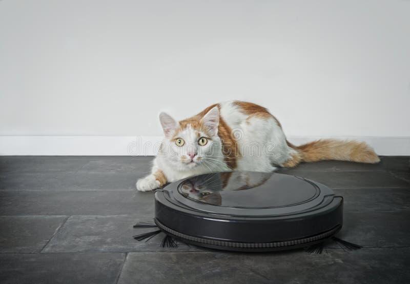 Grappige gestreepte katkat die nieuwsgierig achter een robot stofzuiger kijken stock fotografie