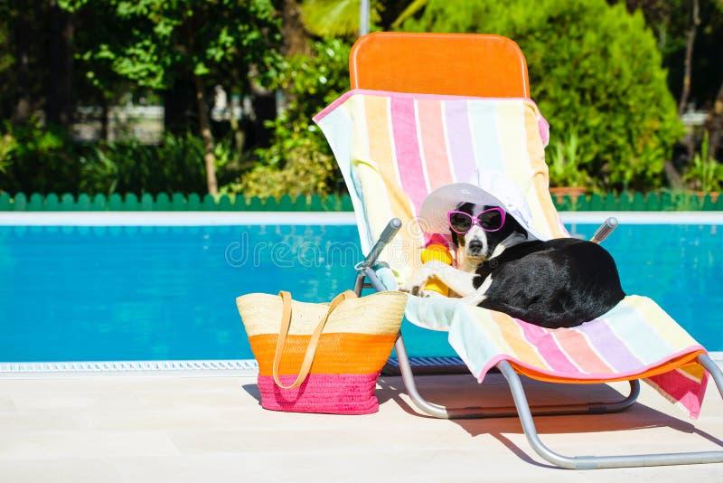 Grappige hond die op de zomervakantie rusten royalty-vrije stock foto