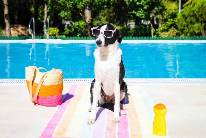 Grappige hond op de zomervakantie bij zwembad royalty-vrije stock afbeeldingen