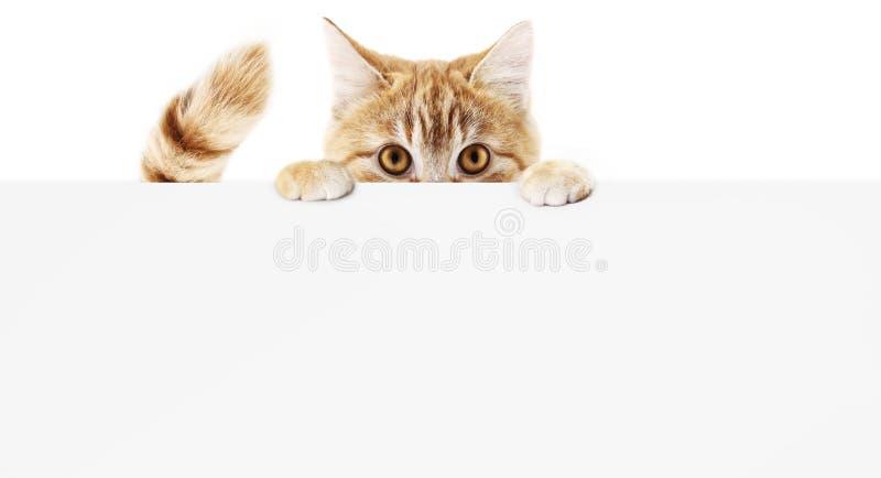 Grappige huisdierenkat die die een aanplakbiljet tonen op witte bla wordt geïsoleerd als achtergrond vector illustratie