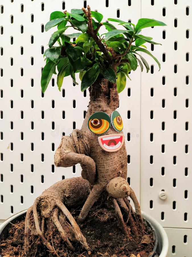 Grappige installatie met grote ogen en mond Groen blad-als hairsty haar, stock fotografie