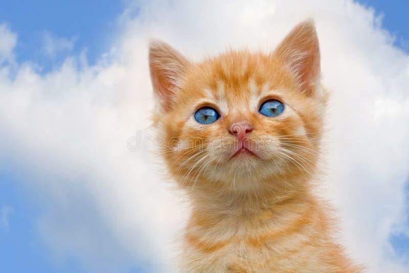 Grappige kat stock afbeelding