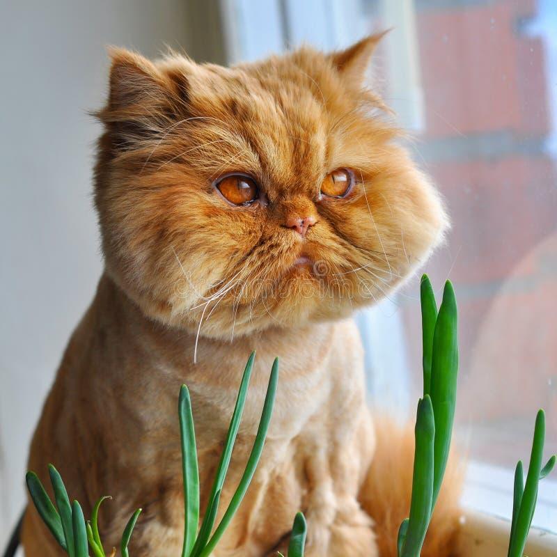 Grappige kat en groene uien royalty-vrije stock afbeeldingen