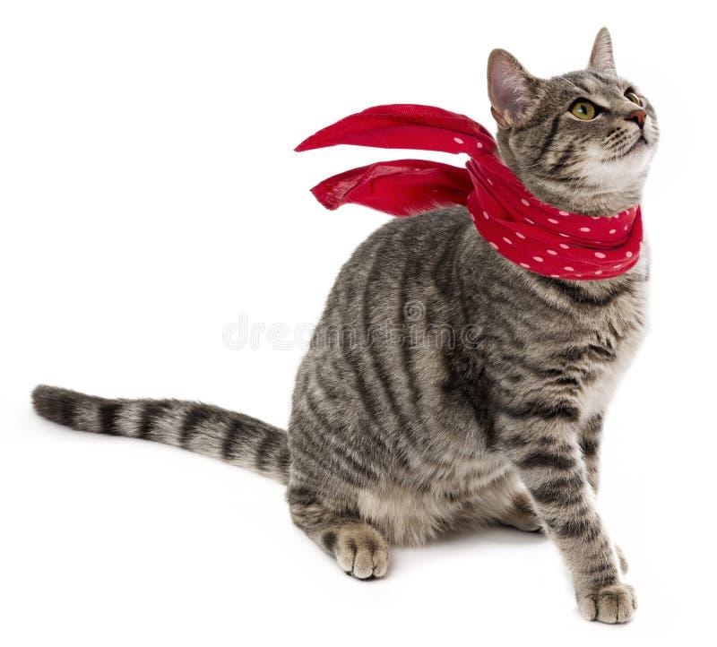 Grappige kat met rode sjaal royalty-vrije stock foto's