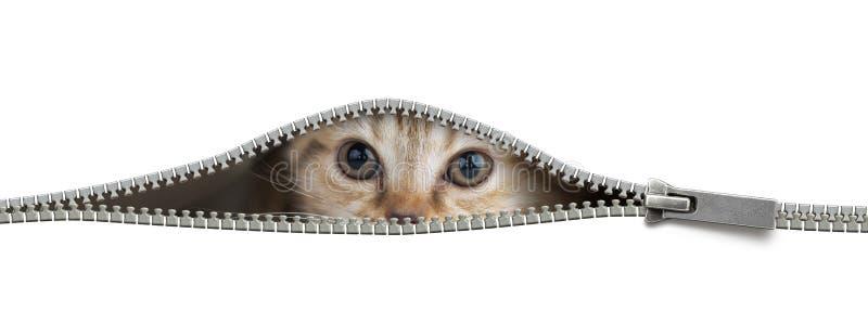 Grappige kat in open geïsoleerd ritssluitingsgat stock fotografie