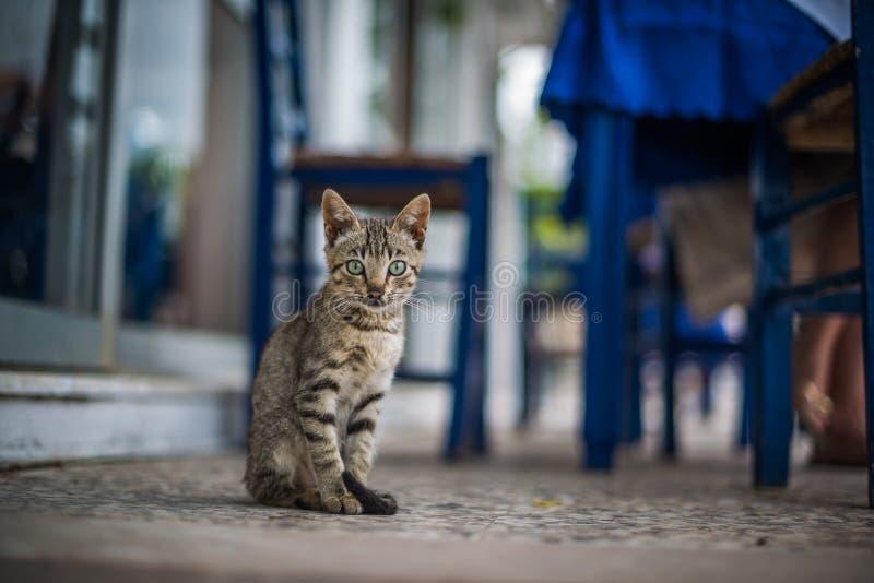 Grappige kat in Zakynthos, Griekenland stock afbeelding