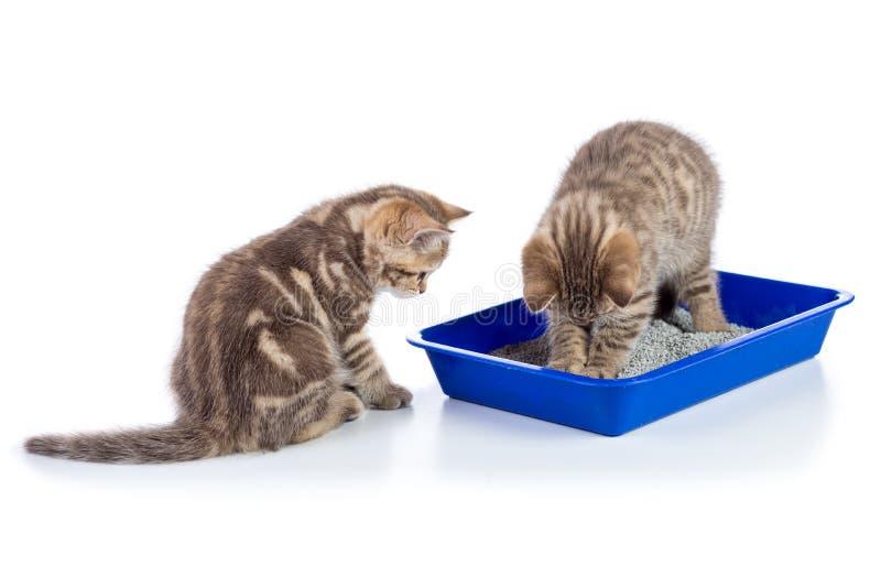 Grappige katjes die in een kattentoilet zitten die op wit wordt geïsoleerd stock foto's