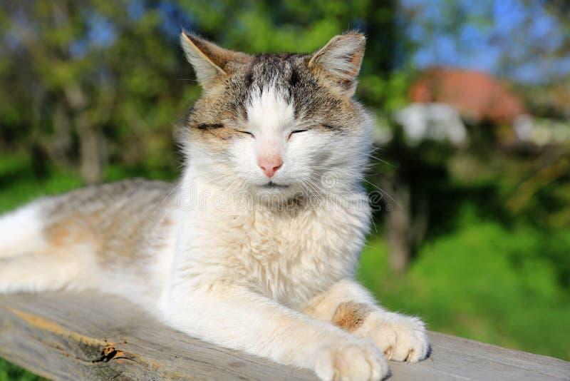 Grappige kattenslaap in openlucht royalty-vrije stock fotografie