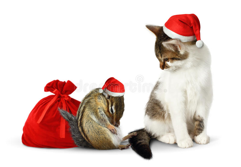 Grappige Kerstmishuisdieren, grappige aardeekhoorn en kat met santahoed en zak stock fotografie