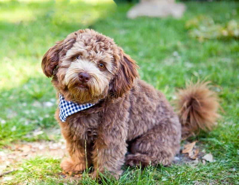 Grappige kleine hond royalty-vrije stock fotografie