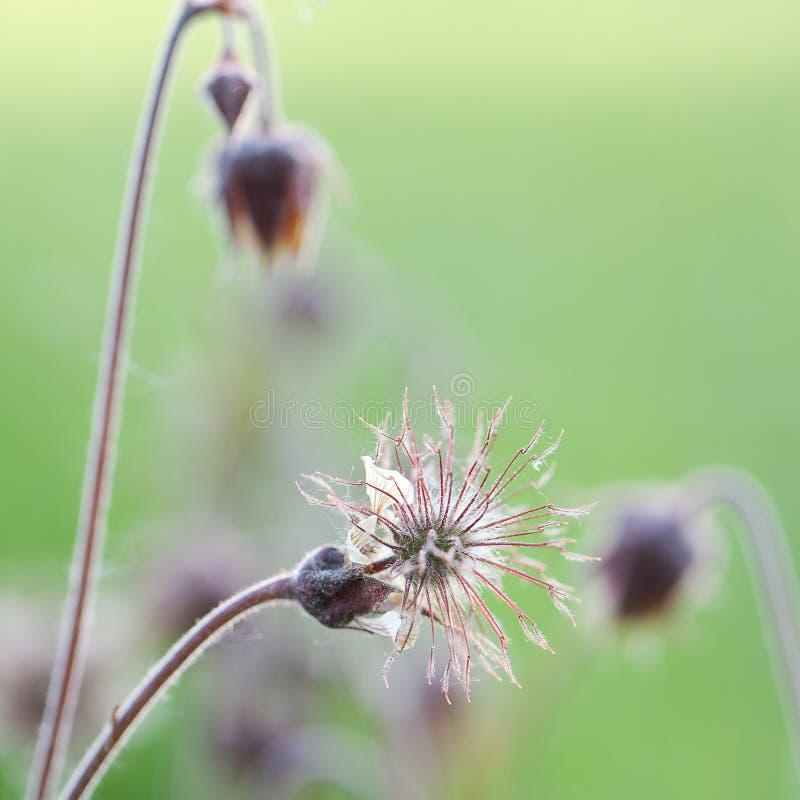 Grappige langzaam verdwenen bloem stock foto