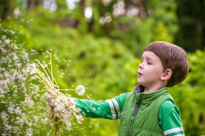 Grappige leuke jong geitjejongen die pret met paardebloembloem hebben op warm en stock foto's