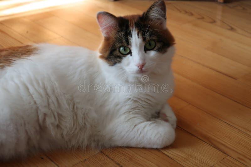 Grappige leuke multicolored kat stock afbeelding