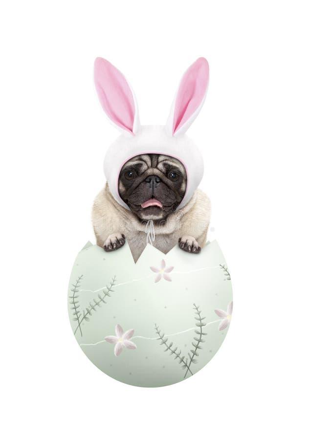 Grappige leuke pug puppyhond die konijntjesoren dragen, die in pastelkleur groen paasei zitten stock fotografie
